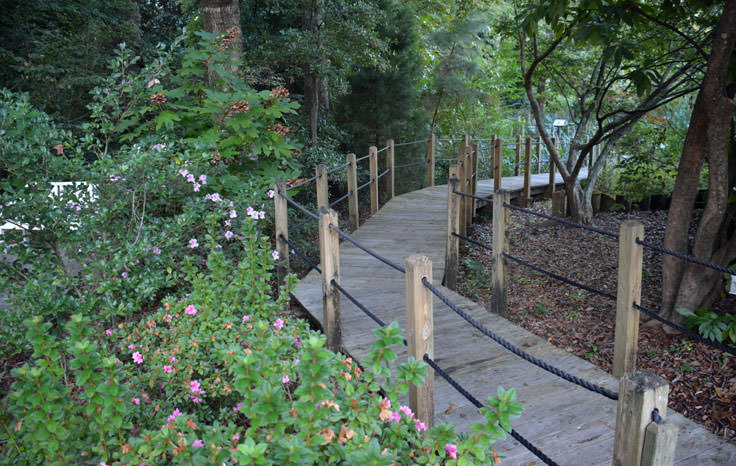 An elevated path at New Hanover County Arboretum in Wilmington, NC