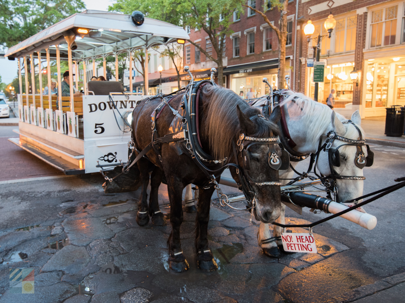 Horse and carriage tours in Wilmington, NC